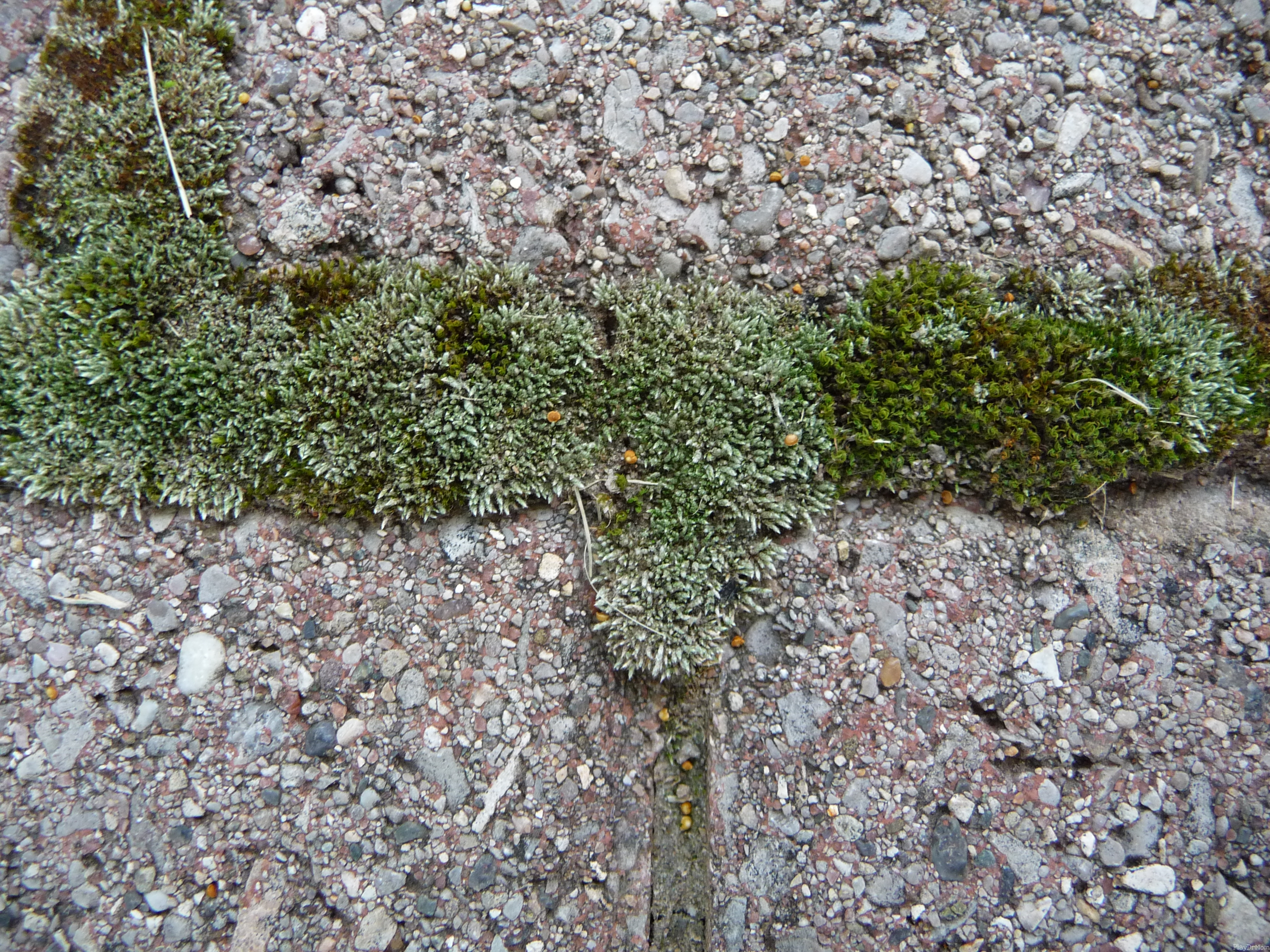 Moss in between bricks
