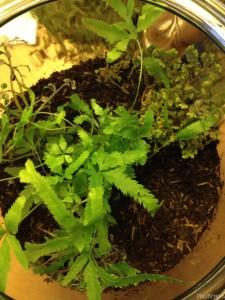 a start to a lush fairy garden terrarium